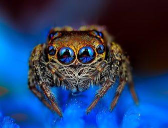 Практикум «Членистоногие: паукообразные»
