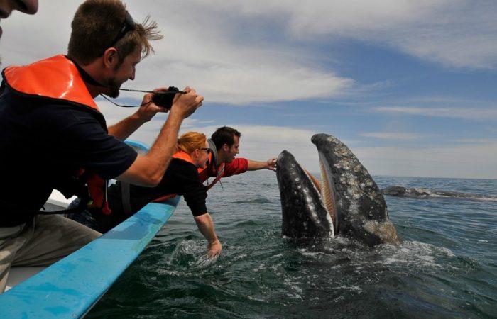 В гости к китам и дельфинам! Вэйлвотчинг: что? как? куда?