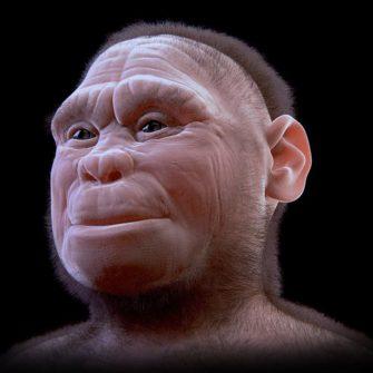 Пре-палеоантропы Азии и Африки: время человечестви