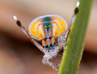 Членистоногие: паукообразные