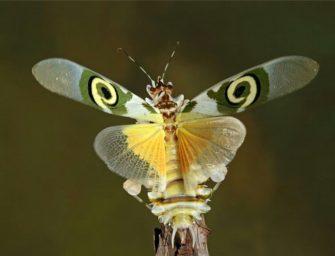Членистоногие: насекомые