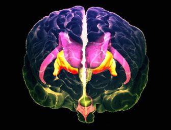 Курс «Нейрофизиология: как работает наш мозг»