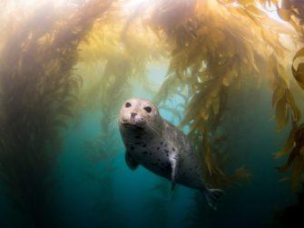 Курс «Биология морских млекопитающих»