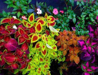 Секреты окраски растений