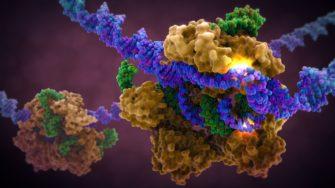Эволюционные эксперименты и «догмы» молекулярной биологии