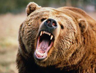 Самооборона от медведя и других опасных хищников с оружием