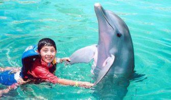Дискуссия «Дельфинотерапия — панацея или миф»