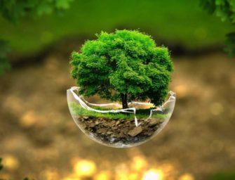 Курс «Экология для всех»