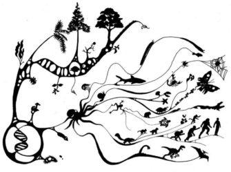 На пути к человеку: азы палеонтологии и основные ароморфозы от бактерии до человека