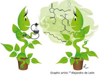 О чем пахнут растения?