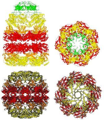Равновесие белкового состава клеток — протеостаз