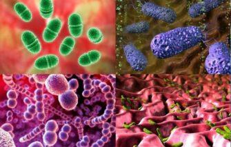 Микроорганизмы — сожители человека