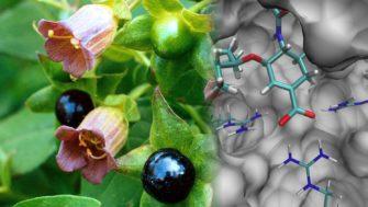 Поиск лекарств: от эмпирики к рационализму
