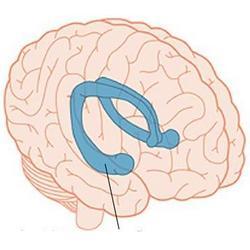 Гиппокамп — «Розеттский камень» нейрофизиологии