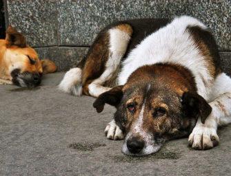 Бездомные собаки глазами биолога