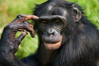 Научная дача «Истоки человеческого мышления и языка»