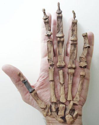 Курс А.В. Маркова «Эволюция человека»