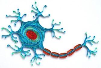 Общее строение мозга; нервные клетки и вещества, составляющие нервные клетки