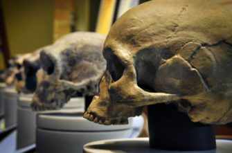 Лекция«Введение в эволюцию человека»,курс«Эволюция человека»