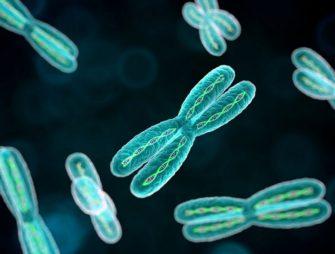 Основы генетики
