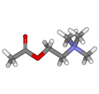 Ацетилхолин (Химия мозга)