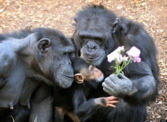 Про любовь. Эволюция семейных отношений (Эволюция человека)
