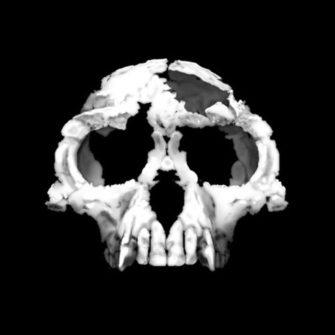 Ранние гоминиды (Эволюция человека)