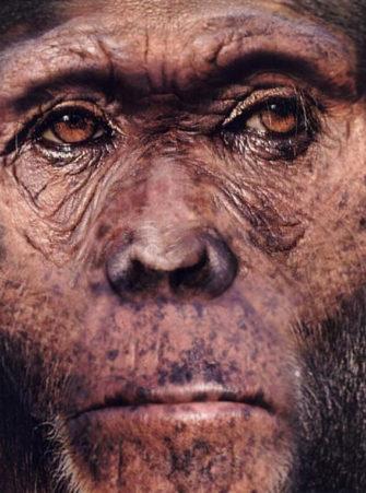 Австралопитеки и ранние Homo (Эволюция человека)