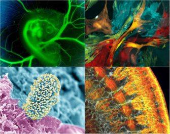 Анатомия. Часть 3 + Основы микробиологии (Общая биология)