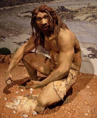 Homo Erectus и гейдельбергский человек (Эволюция человека)