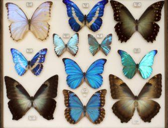 Экскурсия на уникальную выставку «Эстетика и богатство мира насекомых»