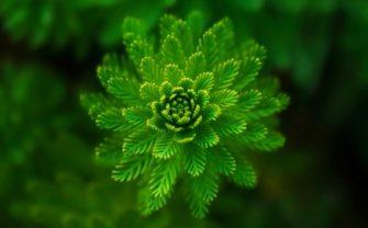 Курс«Растение и свет»