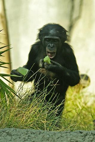 Приматы: в прошлом и настоящем (Антропология)