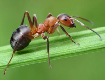 Семинар «Доминирование у муравьев»