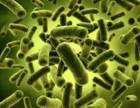 Охотники за микробами: нобелевские герои и неудачники
