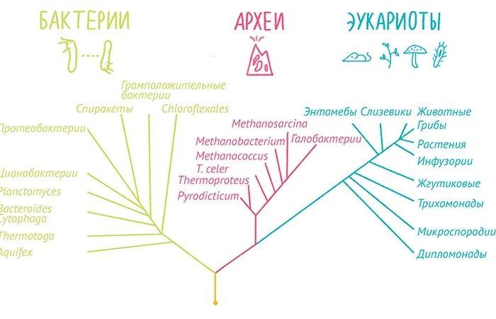 «Сухая» биология  (Биомолекула)