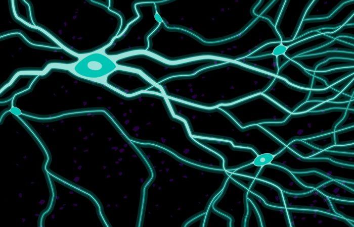 Курс «Поведенческая и когнитивная нейронаука» (Ольга Евгеньевна Сварник)