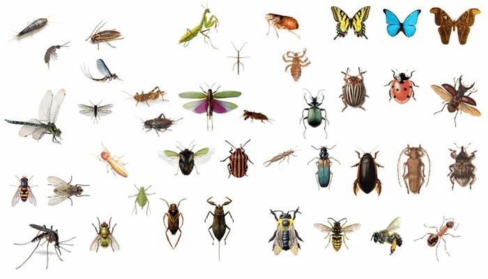 Москва. Курс лекций «Мир насекомых»