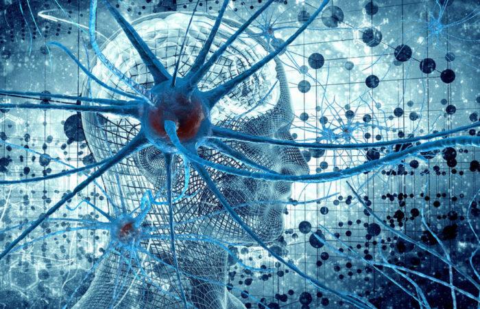 Курс «Нейрофизиология поведения» (Дубынин Вячеслав Альбертович)